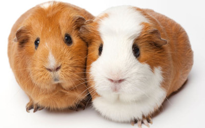Bestanti-aging.com is looking for human guinea pigs!