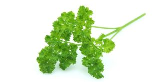 Benefits and properties of parsley
