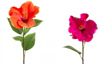 "10 reasons to add hibiscus flower anti-aging ""plant-botox"" in your skincare routine"