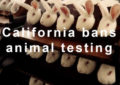 California is Banning Cosmetic Animal Testing FOREVER