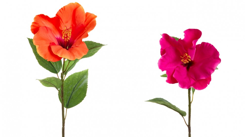 10 reasons to add hibiscus flower anti-aging
