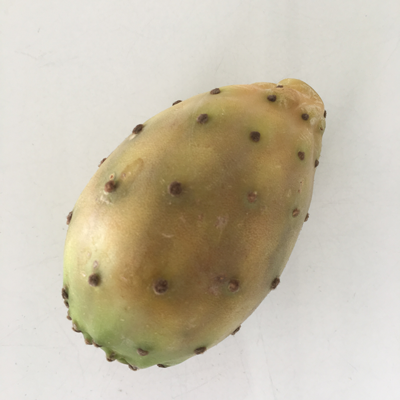 The amazing Anti-Aging power of Pricky Pear a.k.a. Cactus Fruit