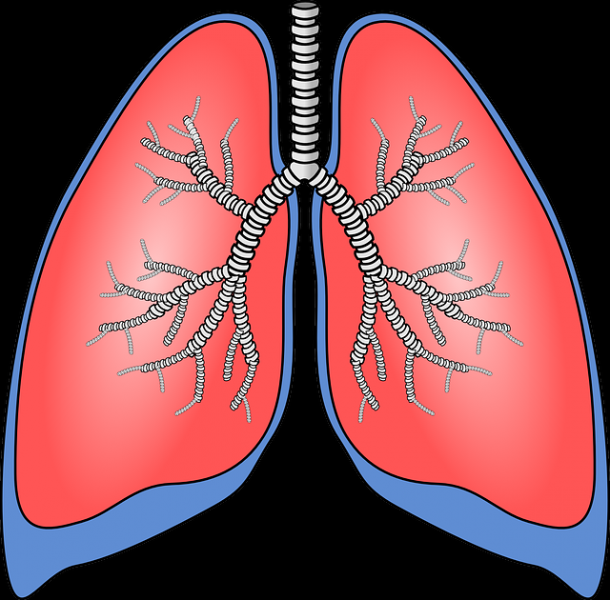 Tips to Purify Your Lungs Naturally