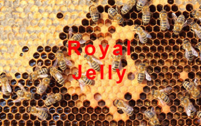 Boost you immune system after Christmas with Royal Jelly!
